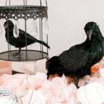 """My Lil' BOO Thing"" Halloween Party on Kara's Party Ideas | KarasPartyIdeas.com (4)"