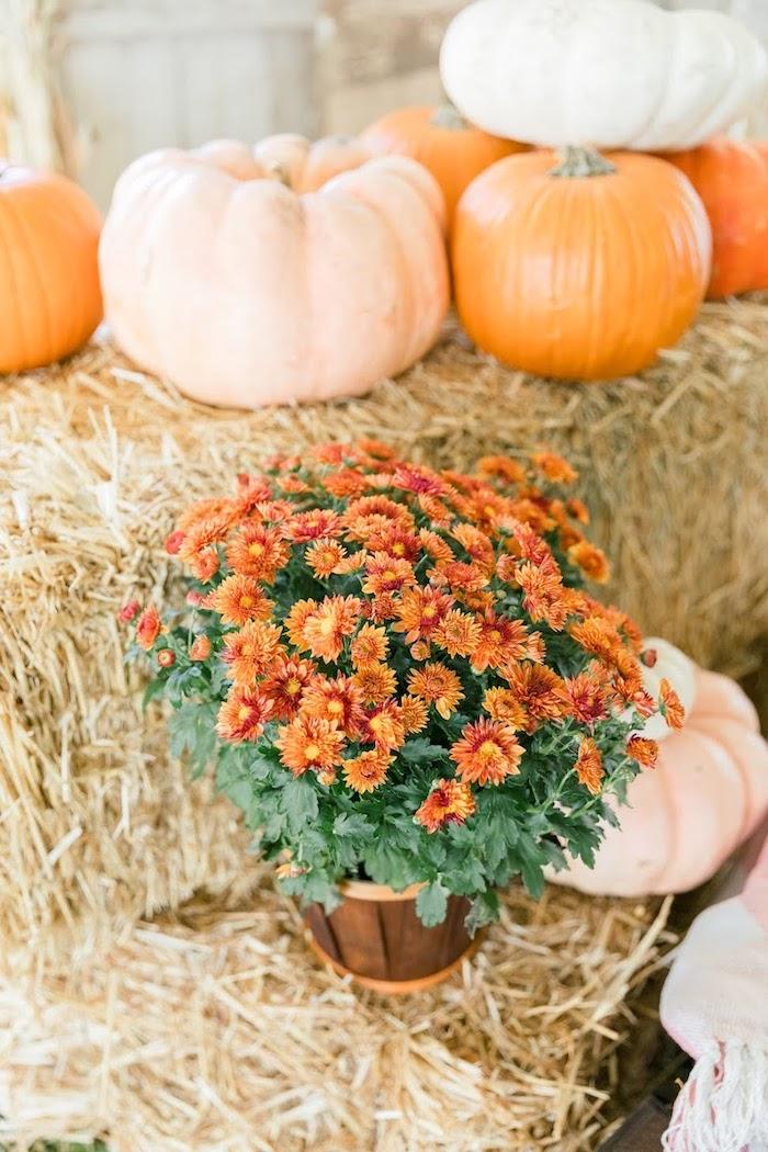 Fall Blooms from a Little Pumpkin Birthday Party on Kara's Party Ideas | KarasPartyIdeas.com (10)