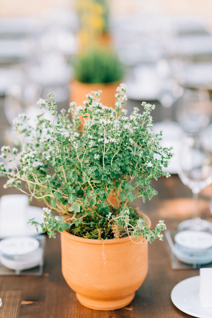Terra Cotta-potted Plant + Table Centerpiece from a Hermes Greek God Inspired Christening Party on Kara's Party Ideas | KarasPartyIdeas.com (26)