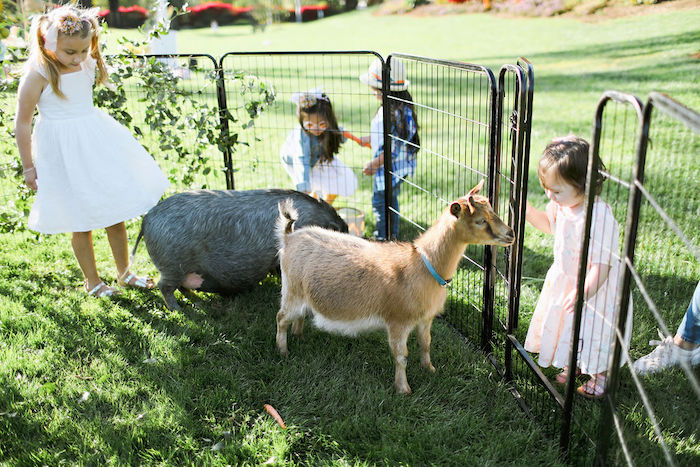 Boho Bunny Petting Zoo Party on Kara's Party Ideas | KarasPartyIdeas.com (14)