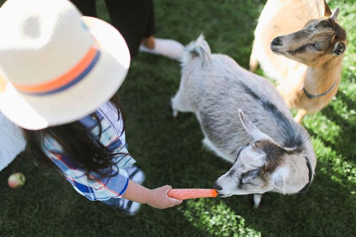 Boho Bunny Petting Zoo Party on Kara's Party Ideas   KarasPartyIdeas.com (13)