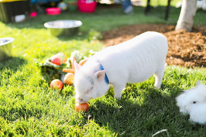 Boho Bunny Petting Zoo Party on Kara's Party Ideas | KarasPartyIdeas.com (7)