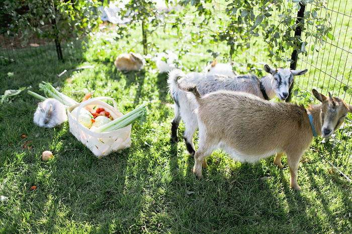 Boho Bunny Petting Zoo Party on Kara's Party Ideas | KarasPartyIdeas.com (4)