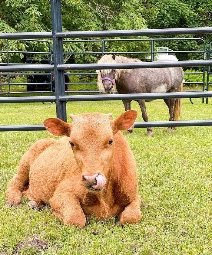 Farm Animals from a Farm 1st Birthday Party on Kara's Party Ideas | KarasPartyIdeas.com
