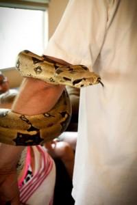 snake_480x720